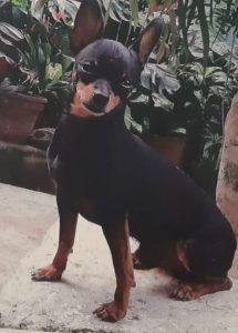 Imputados presuntos responsables de atacar y causarle la muerte a perros en Antioquia y Valle del Cauca - Noticias de Colombia